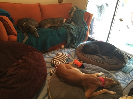 four greyhounds in a small room sleeping